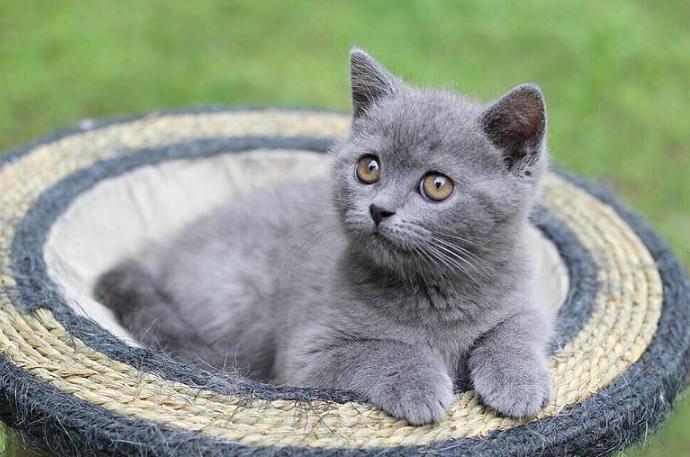 如何成为一名合格的猫奴 养猫需要准备哪些东西需要注意什么